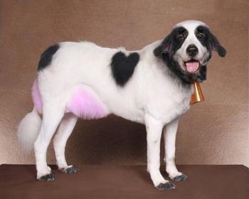 30 смешных кошек и собак до и после того, как они побывали у парикмахера