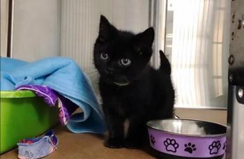 Семья осуществила желание котенка, у которого было больное сердце