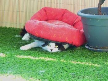 Смешные снимки котиков, логику которых понять сложно