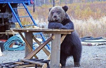 Смешные медведи, которые похожи на людей