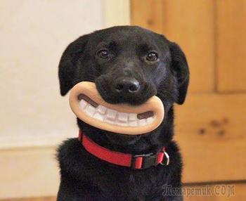 Собаки, которые не подозревают о том, насколько глупо выглядят со своими игрушками
