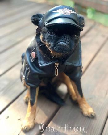 Чико — новая собака-подозревака, которую полюбил весь интернет