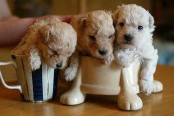 Настоящий бум щенков! Эти малыши никого не оставят равнодушными