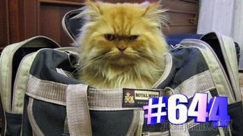Котики и сумки    Позитив с котиками😍😘🐱