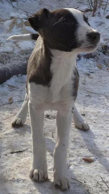 Боня была изгоем в стае собак, но благодаря вашим добрым сердцам она стала домашней!