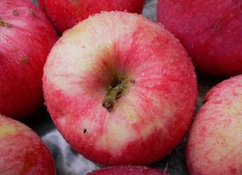 Сорта яблок — список по алфавиту: фото и названия