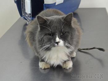Ласковому котику срочно нужен дом!!!