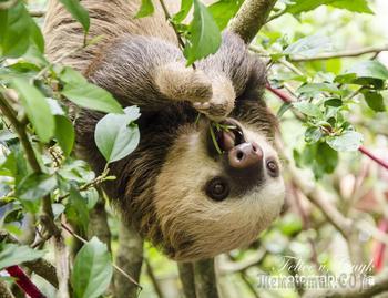 30 фото прелестнейших детёнышей животных в дикой природе