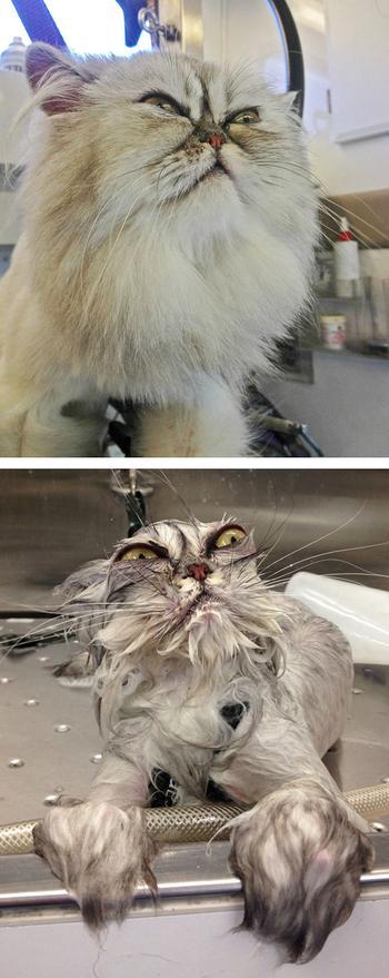 25 животных до и после купания