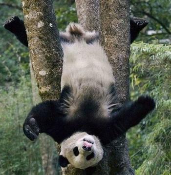17 забавных животных, которые застряли, но не растеряли оптимизма