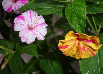 Топ-6 самых красивых ночных цветов для дачного участка