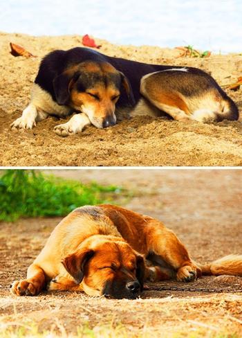 6 поз для сна, которые помогут лучше понять вашу собаку