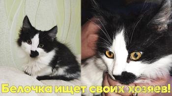 Мегаактивный котенок Белочка ищет дом