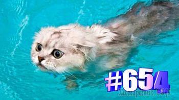 Коты и вода (часть 2)👍🤣🐱