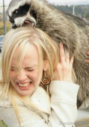 Смешные доказательства того, что животные ненавидят женщин