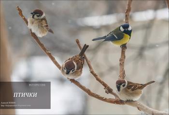 Фотопрогулка.  Птички