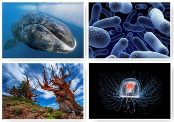 10 самых долгоживущих организмов Земли