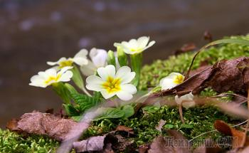 12 месяцев в горах Крыма. Цветы. Март
