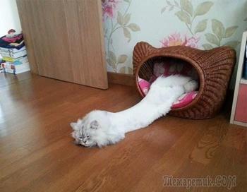 Несколько доказательств того, что кот — это жидкость