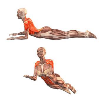Фасциальная гимнастика: 2 упражнения, которые активизируют процесс саморегуляции организма