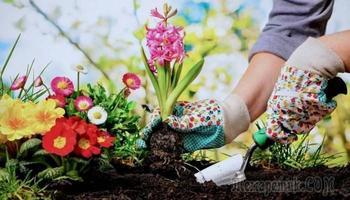 Советы, которые помогут упростить работу в саду