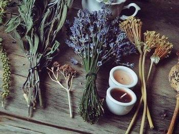 7 магических трав, которые можно вырастить дома на подоконнике