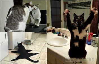 18 потешных котов, которые своим странным поведением шокируют окружающих