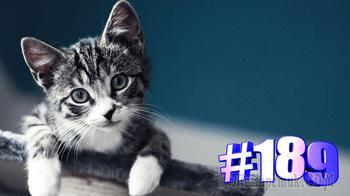 Смешные коты | Приколы с котами | Видео про котов | Котомания # 189 (видео)