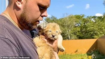 Собака, которая взялась выкармливать двух львят