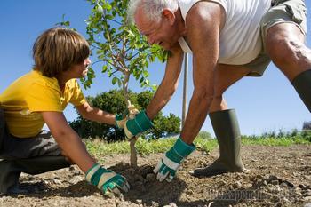 Как правильно посадить дерево весной