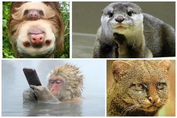 Зверские мемы из дикой природы