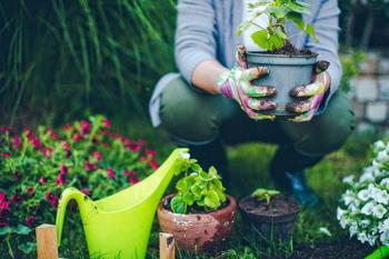 Контейнерный сад – какие растения выбрать и как их красиво скомпоновать