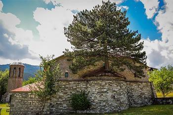 Природа взяла верх: столетнее дерево проросло через старую церковь