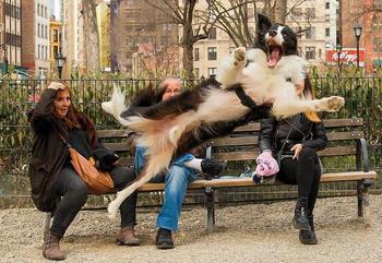 20 собак, пойманных в нужный момент