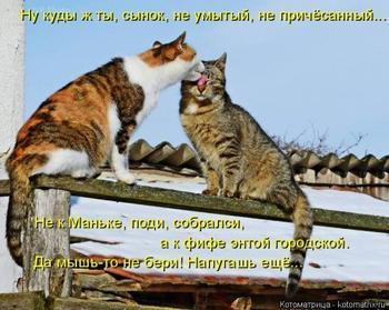 Просто кошкоматрицы;))