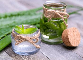 Алоэ вместо лекарств: 6 способов применения