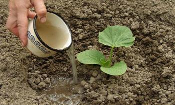 Правильная подкормка тыквы в открытом грунте: чем подкормить и когда вносить удобрение