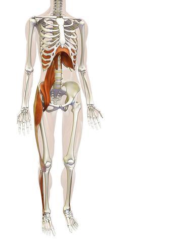 Что происходит с организмом во время голодания
