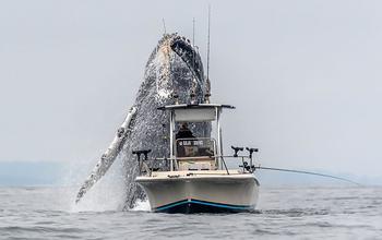 Когда удача на стороне фотографа: огромный горбатый кит вынырнул из воды залива Монтерей, а Дуглас Крафт успел это сфотографировать