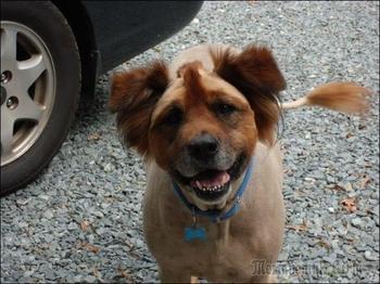 Собаки и кошки с невероятными стрижками