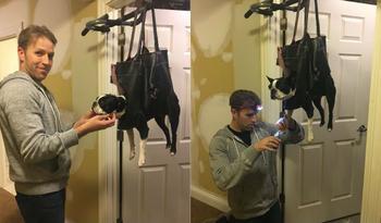 Гениальный лайфхак для собачников: как подстричь когти питомцу и не быть съеденным