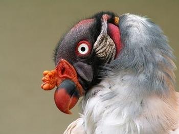 Неведома зверушка: удивительные существа нашей планеты