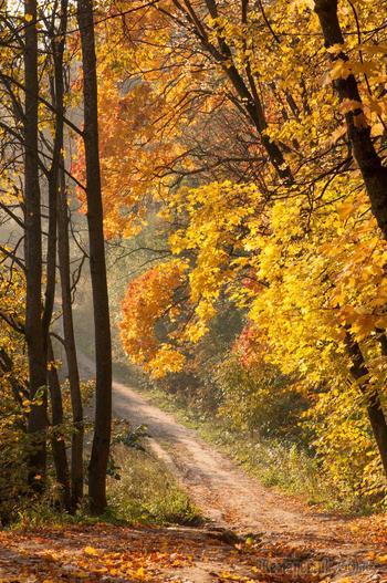 Осень (Стих)