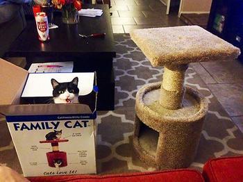 Кошачья логика: нам их не понять