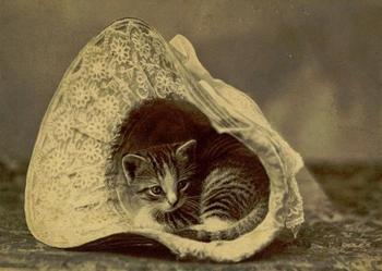 Очаровательные винтажные кошки, которые докажут, что коты правили миром во все времена