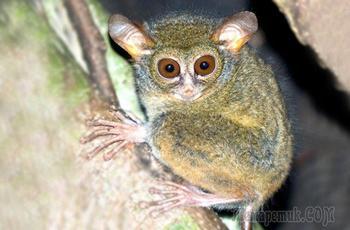 10 новых видов животных открытых учёными в 2017 году