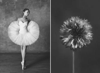 Балерина и цветы: фотосерия о сходстве двух изяществ