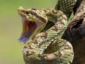 К чему снится змея девушке? Что пророчит такой сон?