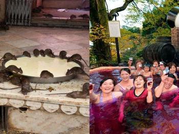 6 туристических достопримечательностей, которые понравятся не всем