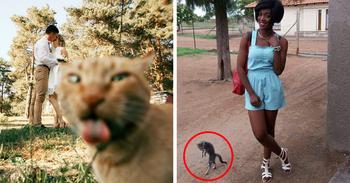 Коты, которые очень хотели попасть в кадр